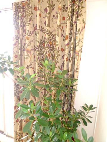 木の柄のカーテン